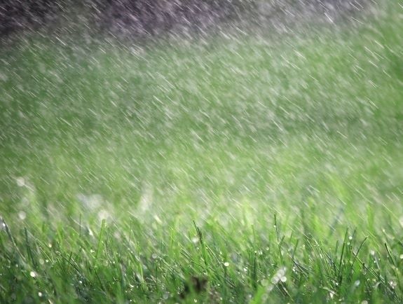 how long does it take for grass to dry after rain-1