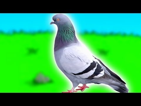 how to become a pigeon and escape life forever-0