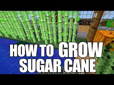 how to grow sugar cane in minecraft-0