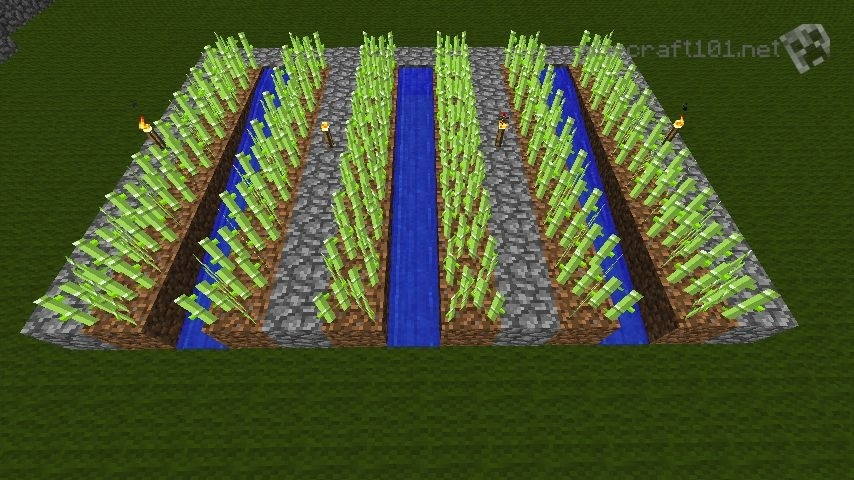 how to grow sugar cane in minecraft-2