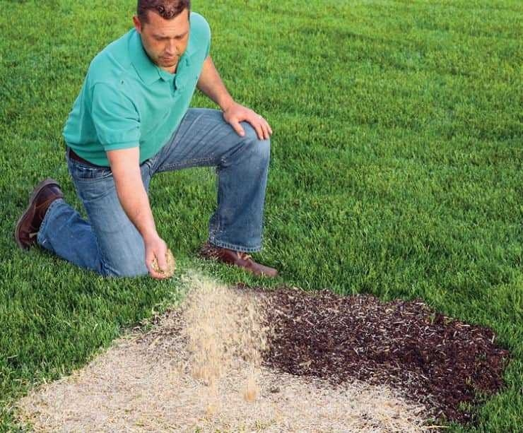 how to keep birds from eating grass seed-3