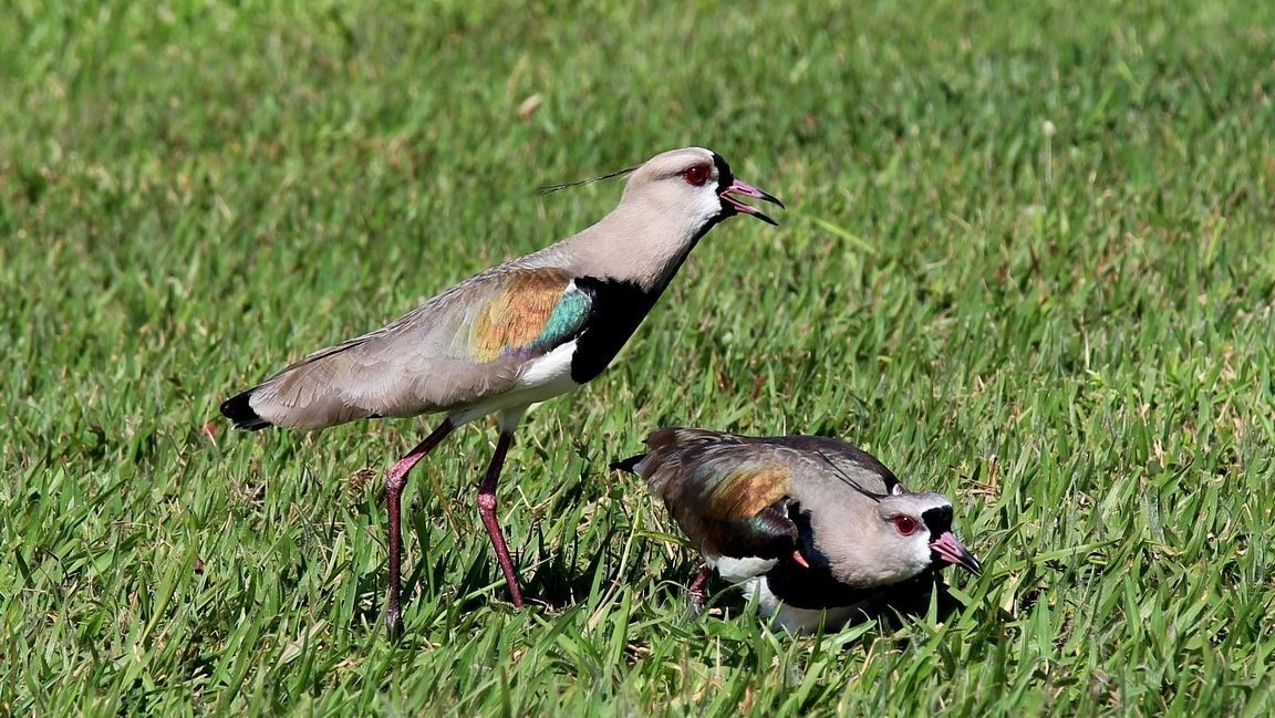 how to keep birds from eating grass seed-4
