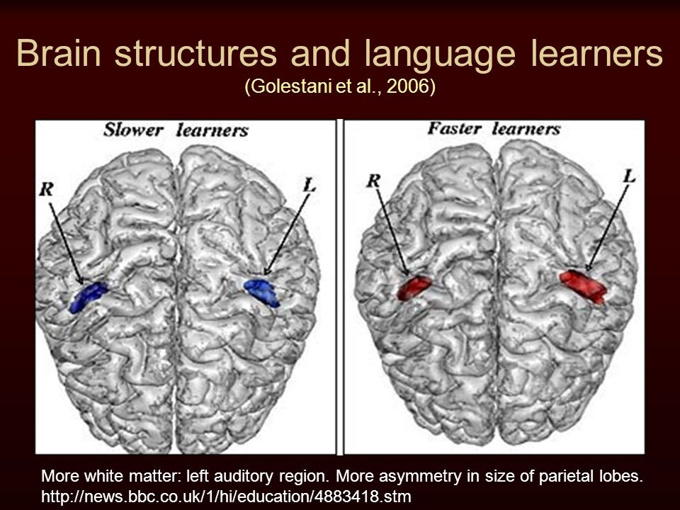 the gray matter in the _____ lobe is denser in people who are bilingual.-0