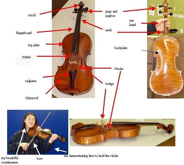 the shape of the sound waves produced by a violin is what makes it sound like a violin.-0