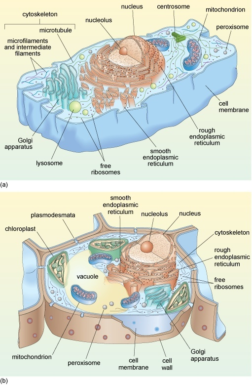 what is the best microscope to get a detailed view of the parts inside of a preserved plant cell?-0