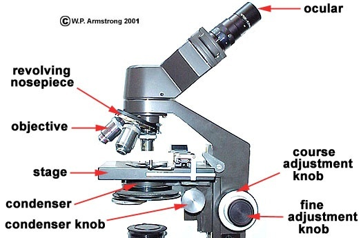 what is the best microscope to get a detailed view of the parts inside of a preserved plant cell?-3