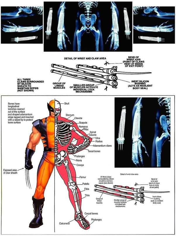 how does wolverine get his claws back-5